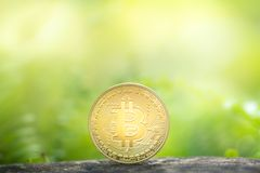 Golden bitcoin on greenery background stock photos