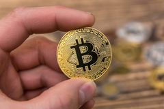 Golden Bitcoin holding in mans fingers closeup. On wooden background royalty free stock photography