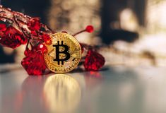 Golden bitcoin stands on the table leaning on the giver with pre. Golden bitcoin stands on the table leaning on the giver with red gems Royalty Free Stock Images