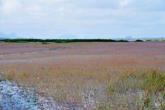 Golden bladderwort or Utricularia aurea at Lake Thale Noi Waterfowl Reserve. Khuan Khanun, Thailand stock photo