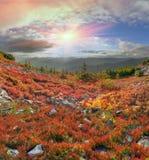 Golden blanket Carpathians Royalty Free Stock Photo