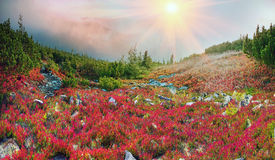 Golden blanket Carpathians Royalty Free Stock Photography