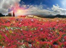Golden blanket Carpathians Stock Photography