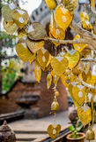 Golden bodhi leaves Royalty Free Stock Photo