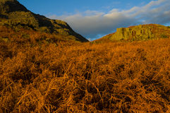 Golden bracken at Wasdale Royalty Free Stock Image