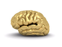 Golden brain Stock Images