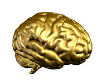 Free Golden Brain Royalty Free Stock Image - 8722916