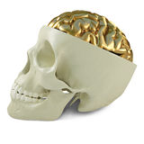 Golden brains Royalty Free Stock Image