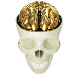 Golden brains Royalty Free Stock Images