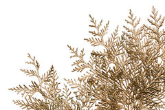 Golden branches Royalty Free Stock Photography