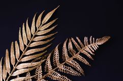 Golden branches of tropical plants on a black background royalty free stock photography