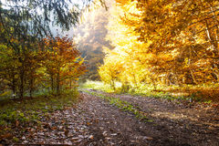Golden Bright Autumn Forest Road Royalty Free Stock Photo