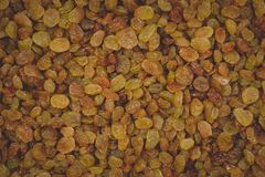 Golden and brown raisins closeup stock images
