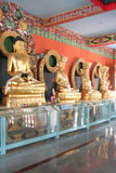 Golden budda statues. Budda statues in a monastry in india Royalty Free Stock Image