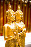 Golden buddha. Golden statues of Buddha in the city of Chiang Mai in northern Thailand Royalty Free Stock Images