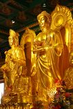 The golden buddha. In thailand royalty free stock image