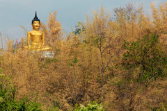 Golden Buddha in bamboo forest Stock Photo