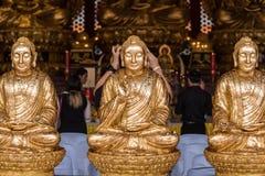 The Golden Buddha Chinese style at Wat Borom Raja Kanjanapisek W Stock Image