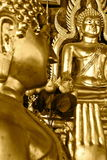 Golden Buddha Figures. At a temple in Thailand Stock Image