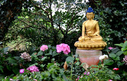 Golden Buddha in the garden. Buddha statue in a beautiful garden. The Buddha is golden and has dark blue hair. The Buddha statue is located among rose flowers Royalty Free Stock Images