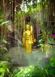 Golden Buddha on green jungle background Stock Photos
