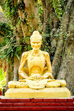 Golden buddha image and big tree background. Royalty Free Stock Photography