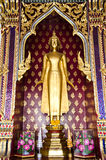 Golden Buddha image temple. Royalty Free Stock Images