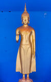 Golden buddha stand statue Royalty Free Stock Photo