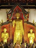 Golden Buddha standing Royalty Free Stock Image