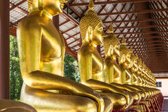 Golden buddha statue sitting in row Stock Photo