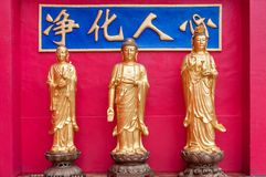 Statues at Ten Thousand Buddhas royalty free stock image