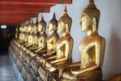 Golden buddha statues in row. Thailand Stock Photos