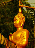 Golden Buddha statues. With a wall covered by moss outside of a temple in  Thailand Royalty Free Stock Image