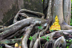 Golden buddha on tree roots overwhelm ancient temple walls. Royalty Free Stock Photography
