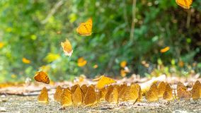 Golden Butterfly on ground. Autumn background with leaves and butterflies. Beautiful on Butterfly with blur background and group of butterflies on surface stock image