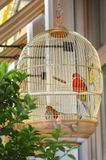 Golden cage with bright parrots. stock photography
