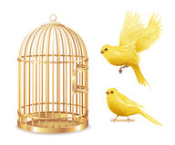 Golden Canary Cage Set. Canary birdcage set of isolated empty gold covered cage and realistic canarybird images on blank background vector illustration royalty free illustration