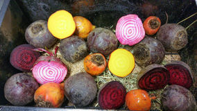 Golden, candy stripe and purple beetroots Royalty Free Stock Photo