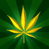 Golden Cannabis leaf green background Royalty Free Stock Photo