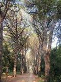 Golden Cape Forest park Stock Photo