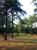 Golden Cape Forest park Stock Photography