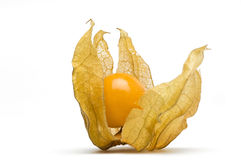 Golden Cape Gooseberry Royalty Free Stock Photo