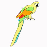 Golden the Caribbean parrot sitting. vector illustration. Golden the Caribbean parrot sitting vector illustration Stock Photo
