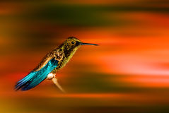 Golden carneval humming bird. Against an abstract background giving the illusion of speed Royalty Free Stock Photography