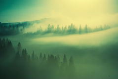 Golden Carpathian fog Stock Images