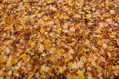 Golden carpet Royalty Free Stock Images