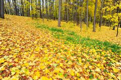Golden Carpet Stock Photo