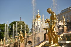 The Golden Cascade of fountains in Peterhof. The famous fountain of Samon Stock Photography