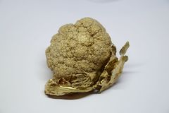Golden cauliflower. Cauliflower painted gold. Abstract and luxury Stock Image