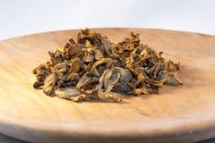 Golden chanterelle (Cantharellus cibarius) Stock Photos